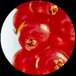 Coloured-bessen-de-keten-oogst